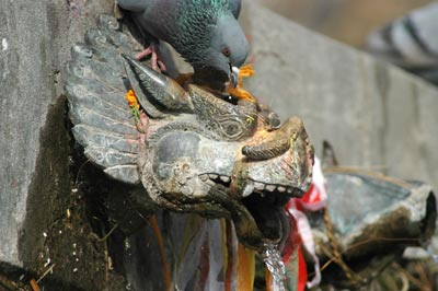 The first sprout at Muktinath in spring.